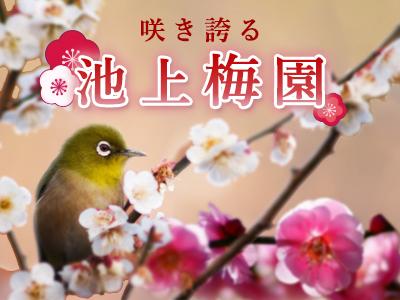 咲き誇る池上梅園